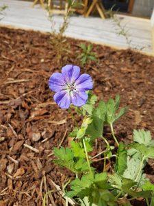 Une touche florale